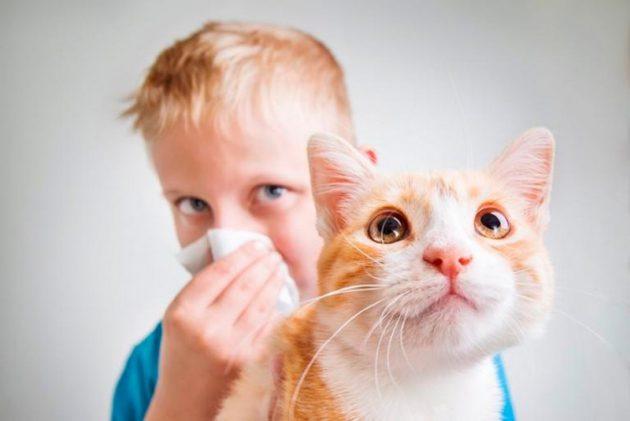 Аллергический конъюнктивит может спровоцировать шерсть домашних животных